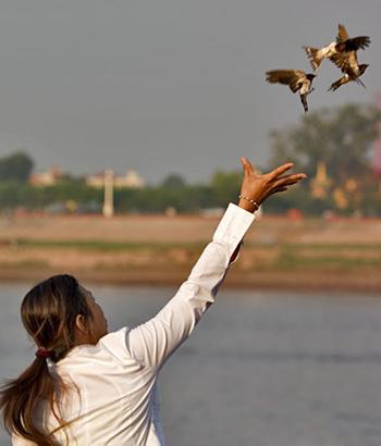 releasing birds