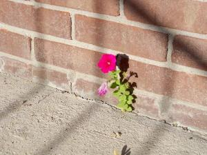 Flower-Crack-Sidewalk